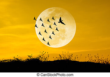 Big moon and birds silhouettes background sun set....