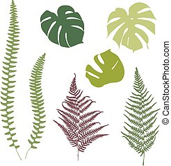 Fern and monstera silhouettes Isolated on white background
