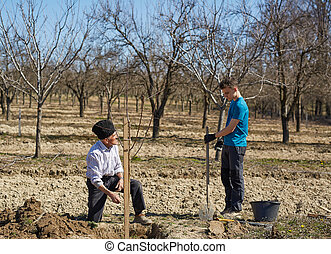 Grandfather and grandson planting a tree together - Senior...
