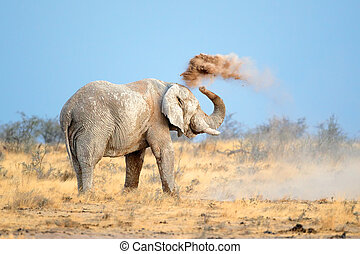 African elephant in dust - Mud covered African elephant...