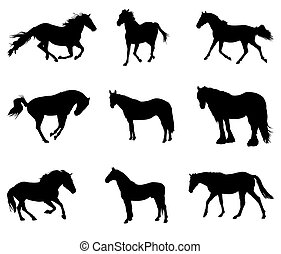 horse silhouettes - collection of horse silhouettes