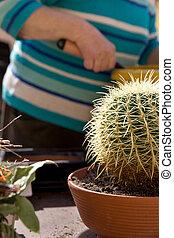 senior adult with cactus