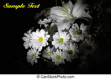 Beautiful white flowers on black background