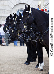 Horses from the British Household Cavalry in formation.