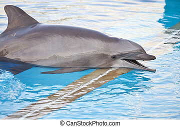 Smiling dolphin in the aquarium shore