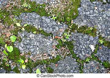 plants and moss growing in asphalt