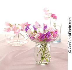 Sweet peas flower - Bouquet of beautiful sweet peas flowers,...