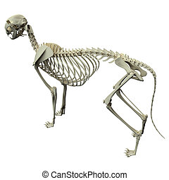 Cat Skeleton Anatomy - Anatomy of a Cat Skeleton - side view