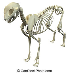 Cat Skeleton Anatomy - Anatomy of a Cat Skeleton