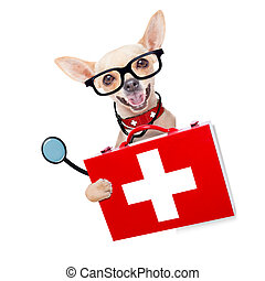 medical doctor dog - chihuahua dog as a medical veterinary...