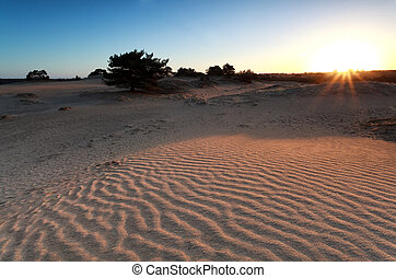 sunrise over sand dune