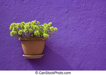 Flower in a pot of a home in Burano village
