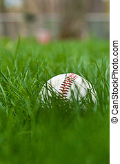 Baseball in Grass - A baseball sits in the grass on a field...