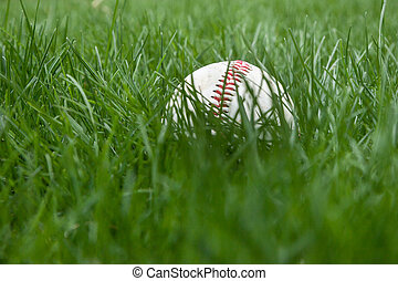 Baseball in Grass - A baseball sits in the grass on a field....