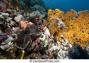 ocean and giant clam - ocean andgiant clam