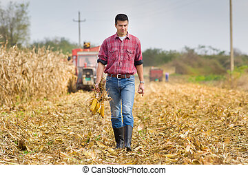Man in corn field - Young farmer walking on field and...