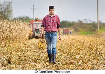 hombre, en, maíz, campo,