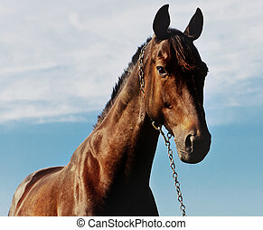 brown horse on a sky background