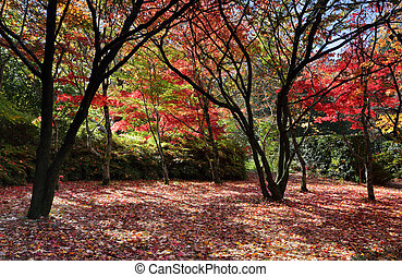 Autumn trees and leaves - Autumn deciduous trees and freshly...
