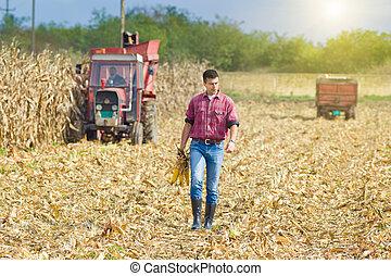 Farmer on corn harvest - Young farmer walking on corn field...