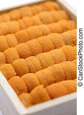 sea urchin roe, japanese sushi and