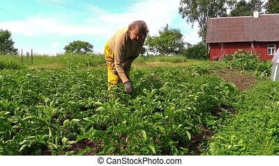 senior farmer care plant