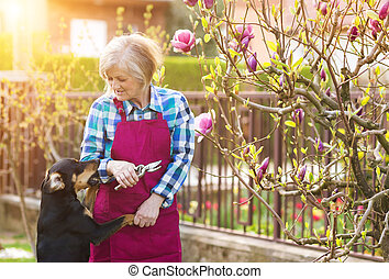 Woman pruning magnolia tree brunches in her garden