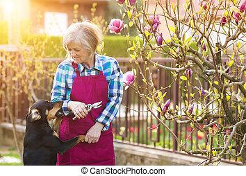 Woman pruning magnolia tree brunches in her garden