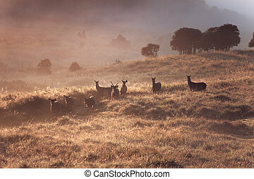 Dreamy landscape with wild deers on sunrise in foggy...