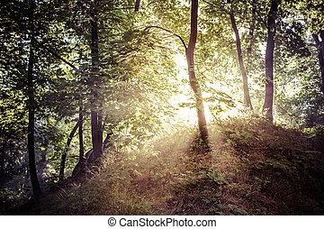 Ochtend Licht - Ochtend licht dat door het Poolse bos...