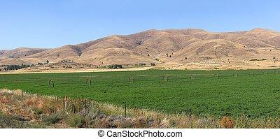 Alfalfa farms and fields. - Alfalfa farms and fields on rt....