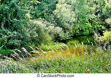 Summer landscape. River in the forest.