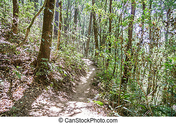 Forest footpath in Kew Mae Pan Nature Trail, Doi Inthanon...