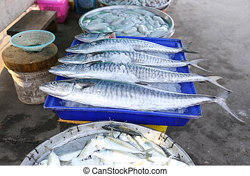 Fresh king mackerel fish on ice backet in the market