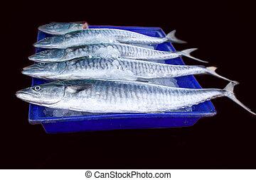 Fresh king mackerel fish isolated - Fresh king mackerel fish...