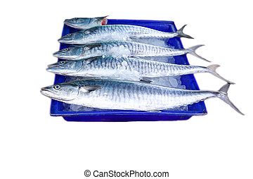 Fresh king mackerel fish isolated - Fresh king mackerel fish...