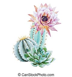 Watercolor cactus - Beautiful vector image with nice...