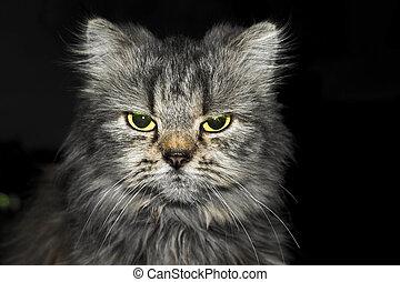 enojado, gato,