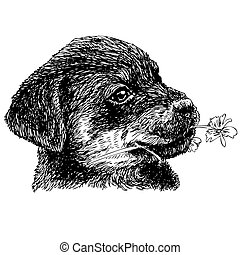 Rottweiler - Image of puppy Rottweiler hand drawn vector