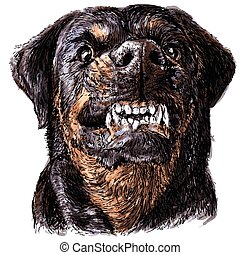 Rottweiler - Image of angry Rottweiler hand drawn vector