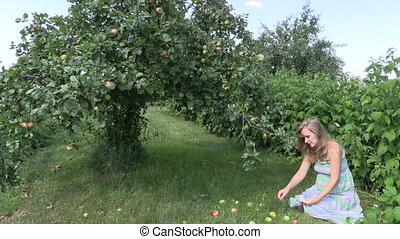 woman pick apple fruits - Pregnant woman gather ripe apple...