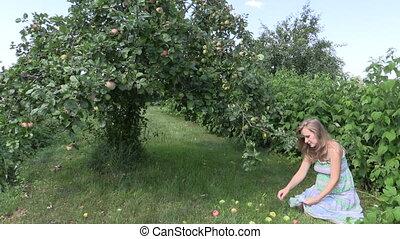 woman pick apple fruits - Pregnant woman gather ripe apple...