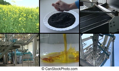 biodiesel process collage - Rape plant blooms Rape seed oil...