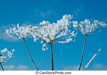 Winter scene .Frozenned flower close up