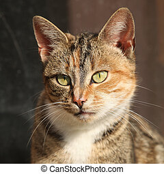 Amazing tricolour cat looking at you - Portrait of amazing...