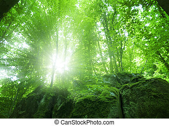 forest - Sunlight in the green forest, spring time