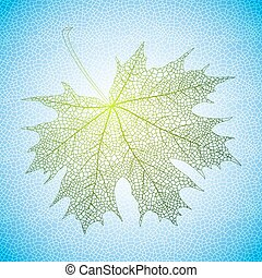 Maple leaf - Illustration of green maple leaf with reticular...