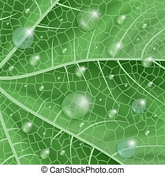 Green leaf with waterdrops - Illustration of green leaf...