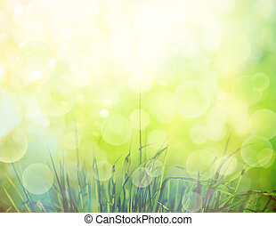 grass background - Spring or summer background with grass in...