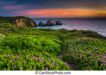 Flowers and trail on a bluff above Rodeo Beach at sunset, at...